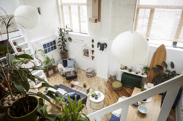 An overhead view of plants in an open-plan living space.