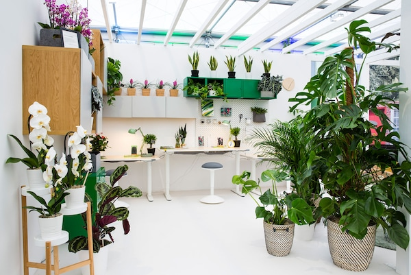 An white office space filled with large grean floor plants.