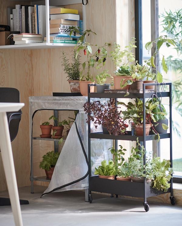 Ao lado de uma janela está um carrinho com rodízios em preto com três prateleiras com muitas ervas aromáticas e vegetais plantados em vasos.