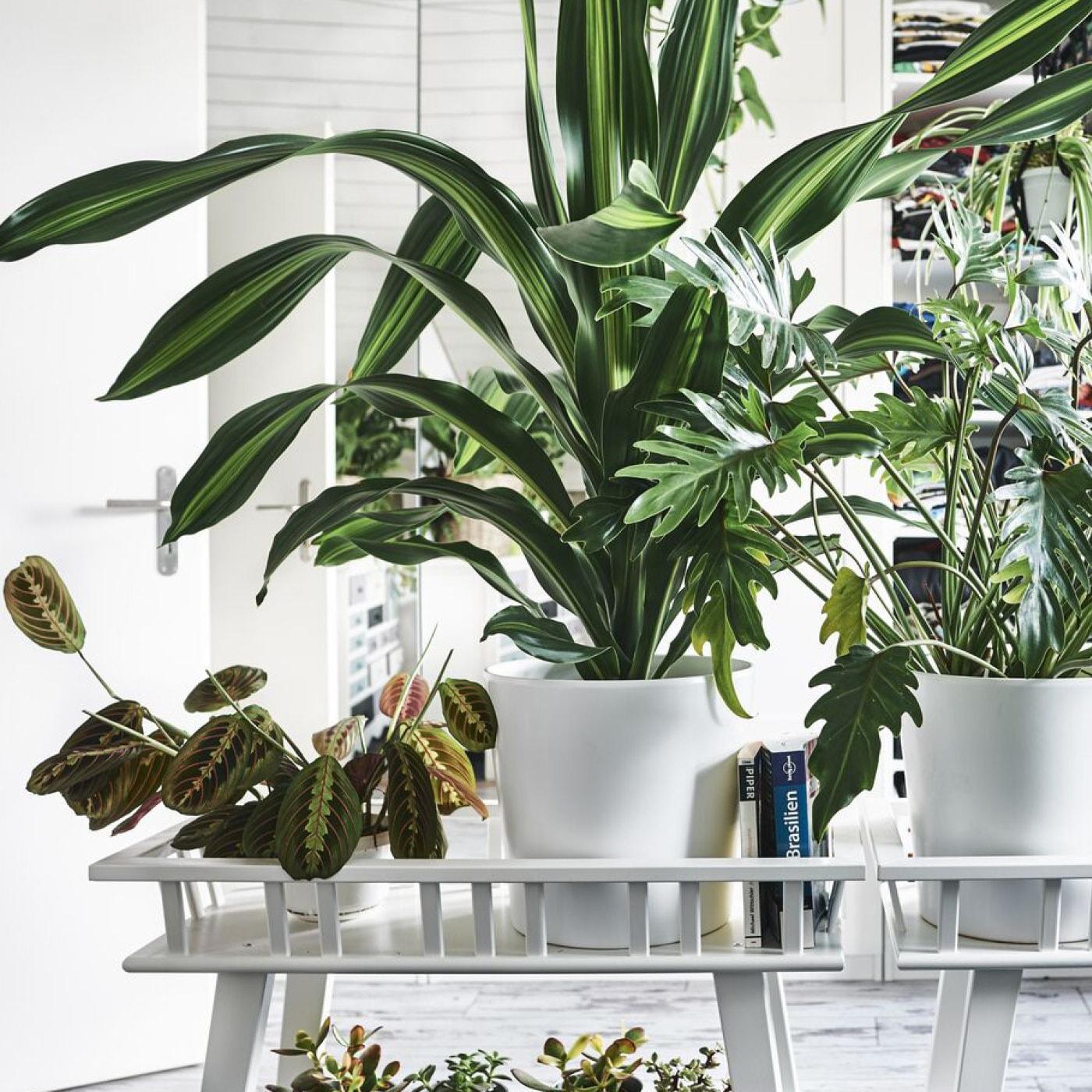 Ontdek onze plantenstandaards