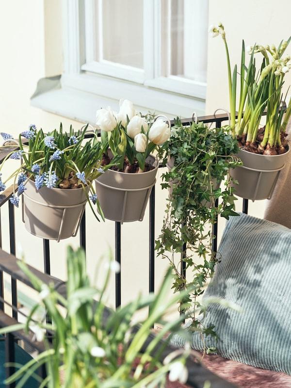 Balkongräcke med krukor med vårblommor.