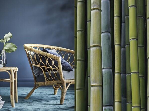 Bambusové stonky na jednej strane obrázku a hotové kreslo s rámom z pleteného bambusu na druhej.