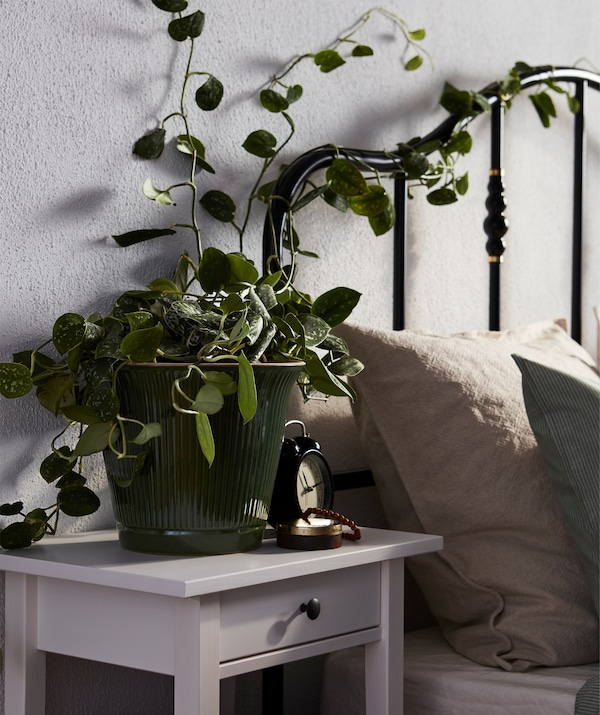 Bed with a black tubing headboard intertwined with climbing ivy growing from a pot placed on the bedside table.