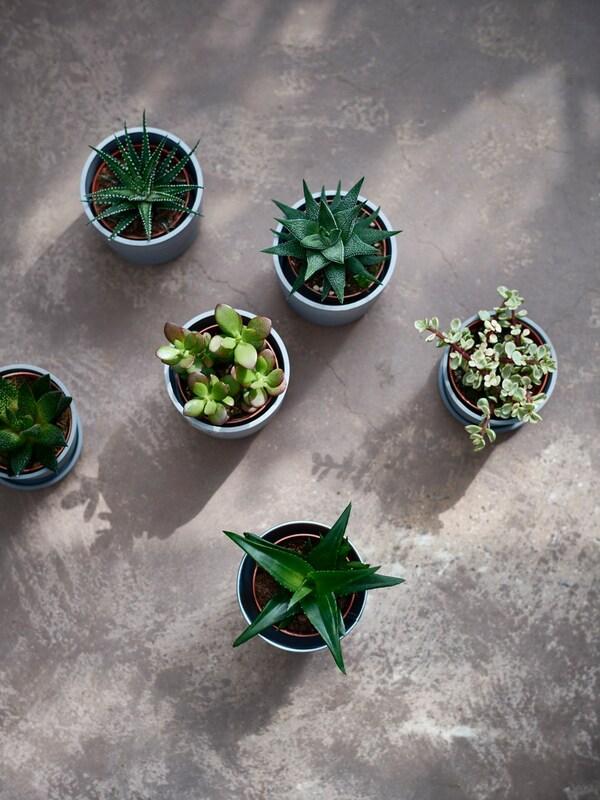 Bela lampa, saksijske biljke i ukrasi na beloj zidnoj polici.