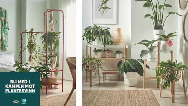 bilde av planter.