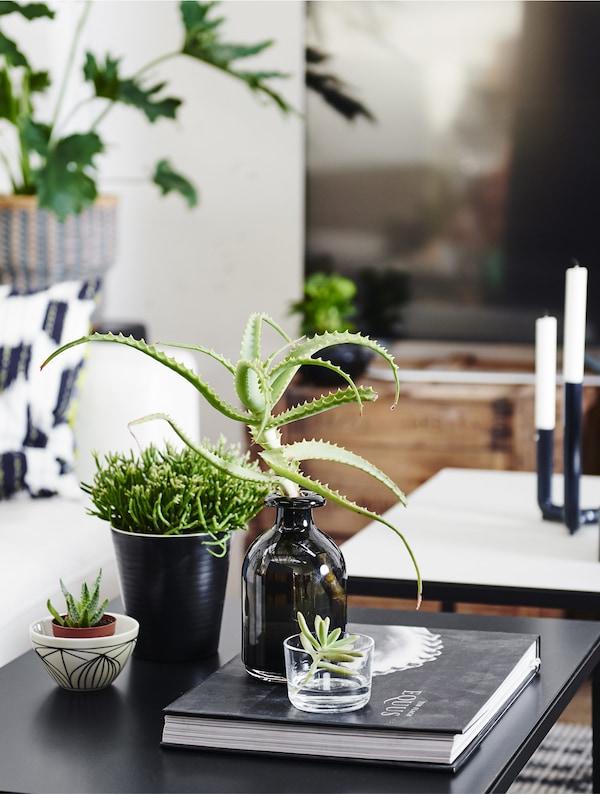 Biljke u različitim vazama i saksijama na crnom stočiću za kafu.