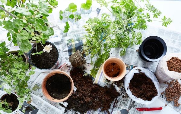 Tipps Fur Zimmerpflanzen So Bleiben Sie Schon Ikea