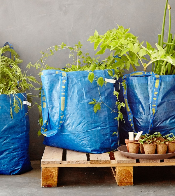 Blue FRAKTA sorting bags filled with plants and dirt, placed on a wooden, open pallet on a concrete floor.