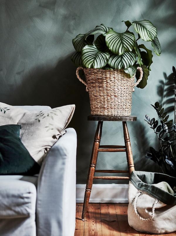 Большой цветочный горшок из бананового волокна с пышным зеленым растением стоит в гостиной.