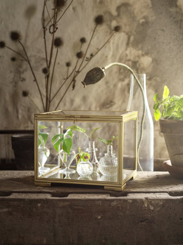 BOMARKEN display box – made of gold-colored steel and glass – is on top of a wooden table and is filled with baby plants.