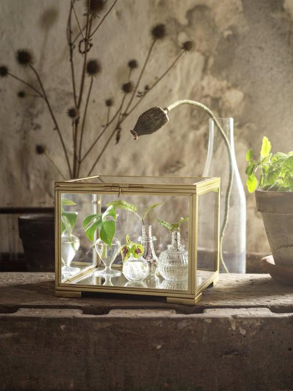 BOMARKEN uitstalkistje, gemaakt van goudkleurig staal en glas, staat op een houten tafel en is gevuld met kiemplantjes.