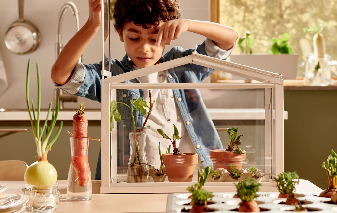 Boy peering down on young plants in a SOCKER greenhouse. Various vegetables set in water or soil next to it on the table.
