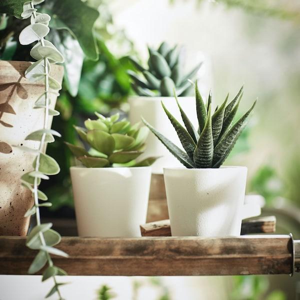 Bright room, small FEJKA plants sitting on wood shelf