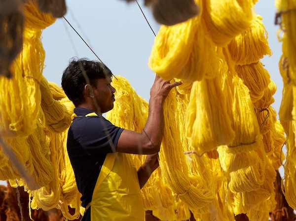 Bundles of yellow wool yarn that have just been dyed, hanging out to dry and being checked by a male worker.