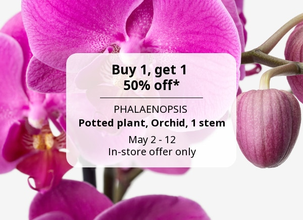 1 Get 50 Off Phalaenopsis Potted Plant Orchid