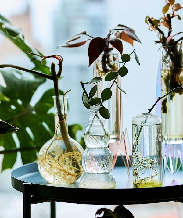 Glass vessels containing small plants and cuttings on a tray table.