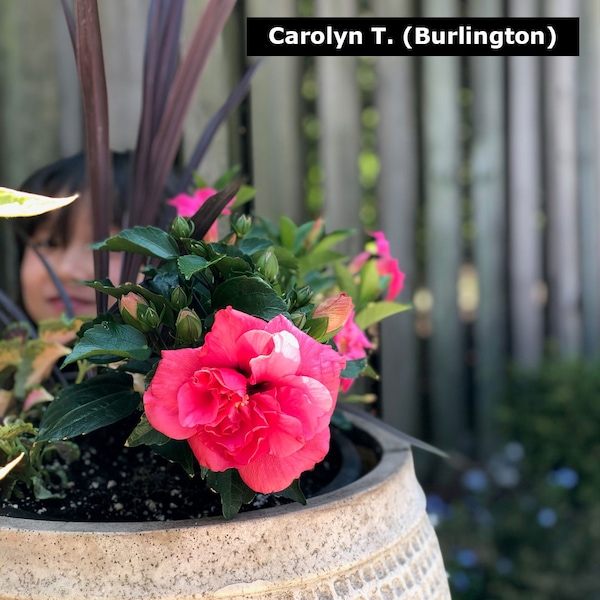 Carolyn T. (Burlington)
