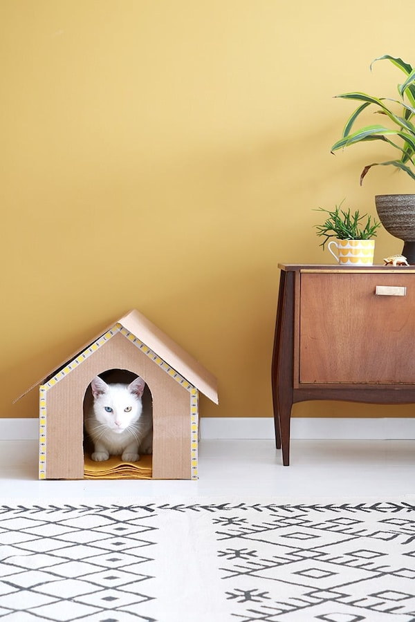 Cat house with cat in the living room with rug and a low cabinet