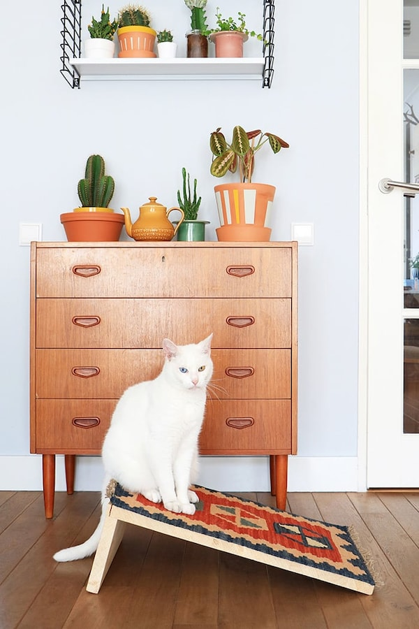 Cat with cat house and wooden chest of drawers, and wall shelf with plants