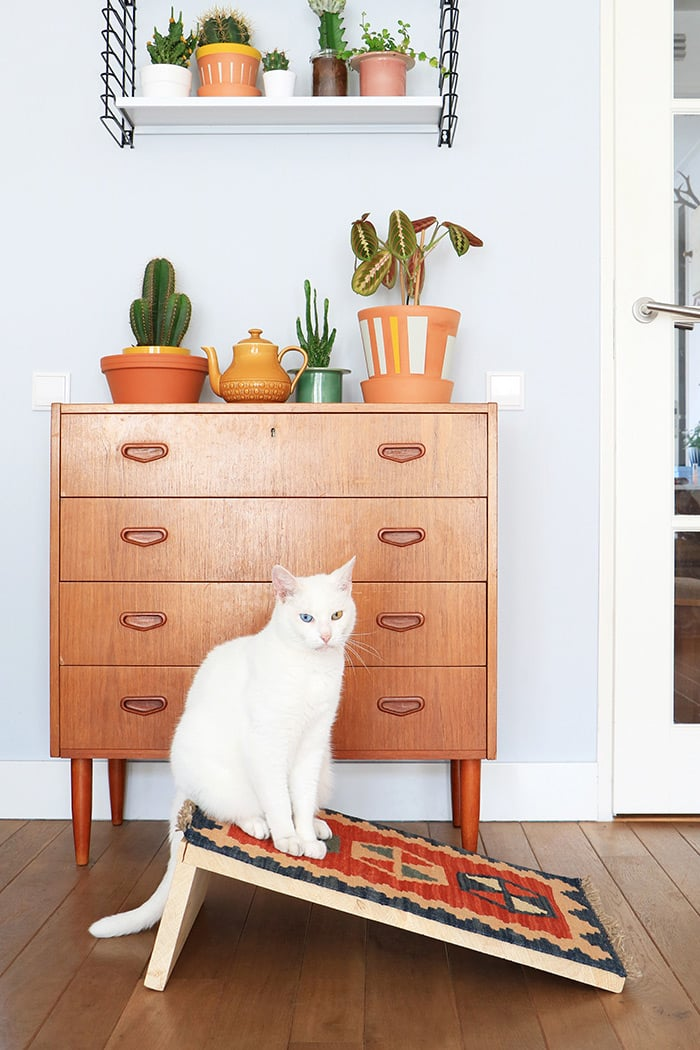 Cat with cat house and wooden chest of drawers with plants