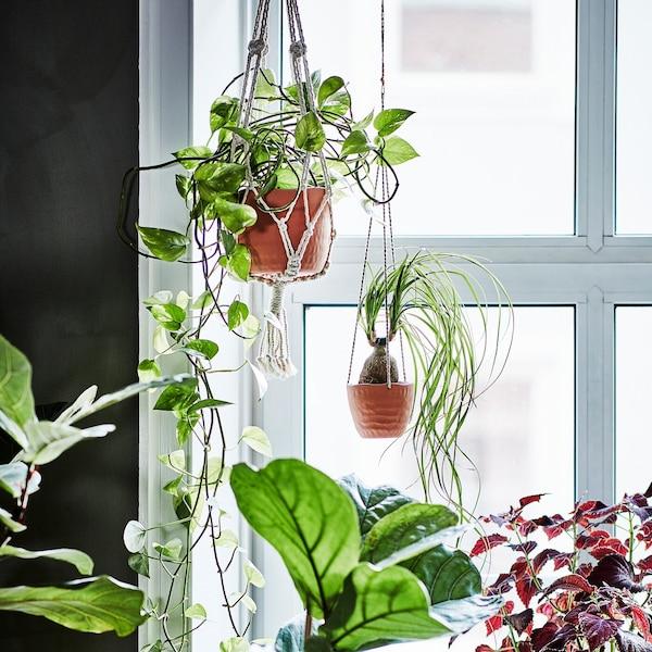 Четыре растения стоят на окне. Одно из них растет в подвесном кашпо из хлопчатобумажного материала, остальные в керамических горшках.