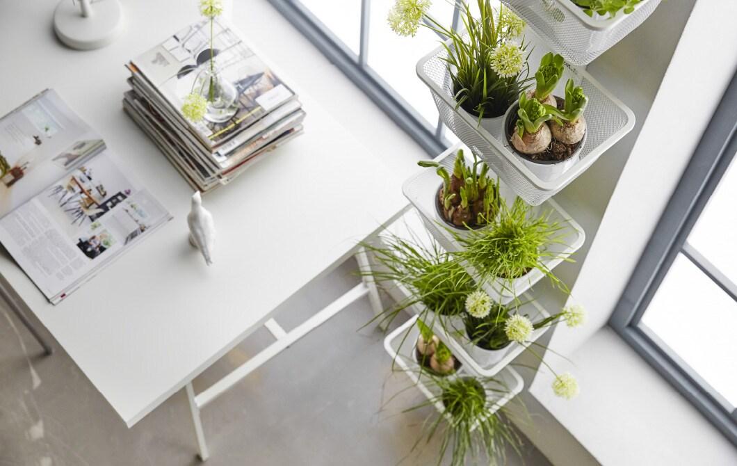 Cinq façons de trouver de l'espace pour jardiner à l'intérieur