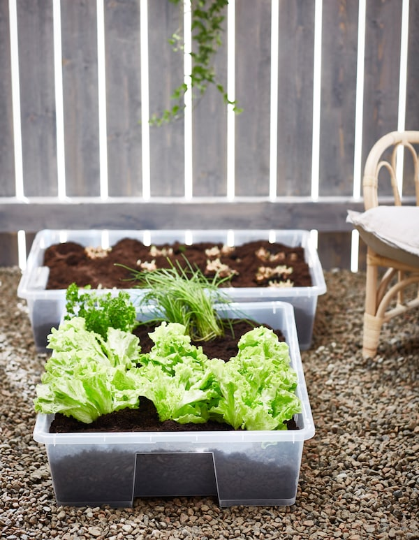 Clear, plastic boxes with vegetables planted in them.