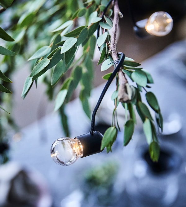 Close-up of a dried branch decorated with eucalyptus and an LED lighting chain.