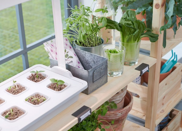 Close-up of small seedlings and plants in pots, on wooden shelves.