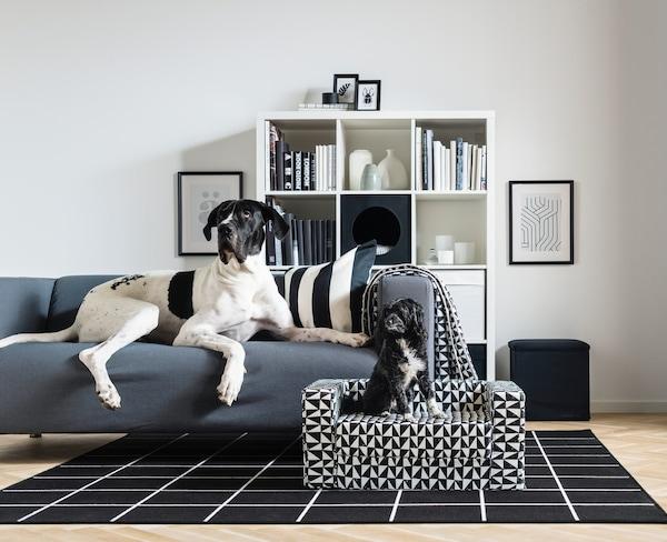 Cómo limpiar sofás de tela que son los preferidos de tu mascota