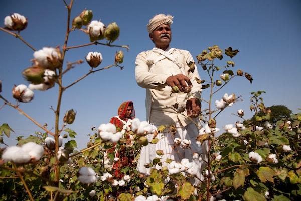 cotton sustainable ikea