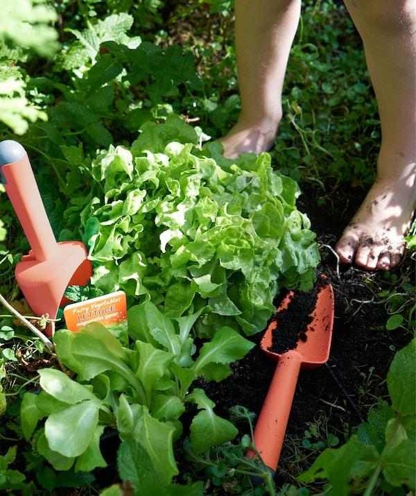 Crveni, plastični alat za baštovanstvo, među biljkama u delu vrta za začinima.