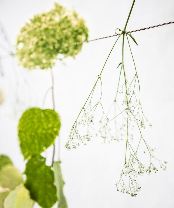 Cvijeće s jednom stabljikom visi s užeta.
