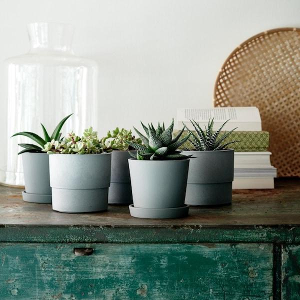 Dă viață livingului cu plante de interior