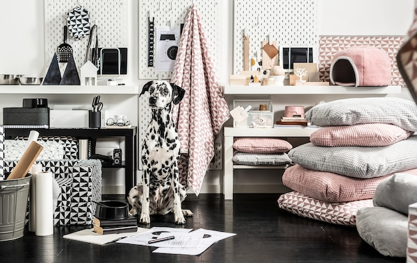 Dalmatian sitting upright surrounded by a great variety of color-matched pet furniture, textiles and accessories.