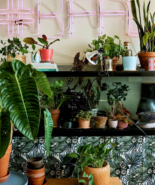 A pink neon sign above black wall-mounted shelves filled with various size pot plants.