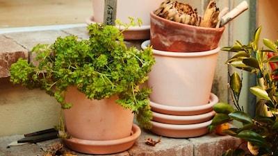 Plantes, cache-pots et supports