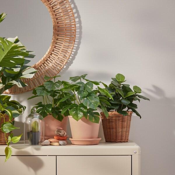 decoración de verano con plantas naturales