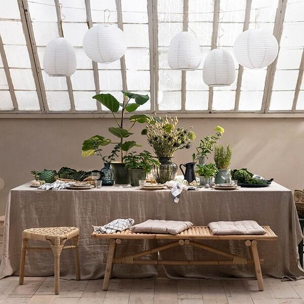 Décorez votre maison avec des plantes d'intérieur. Une sélection limitée de plantes vivantes est maintenant offerte dans le service Cliquer+Ramasser.