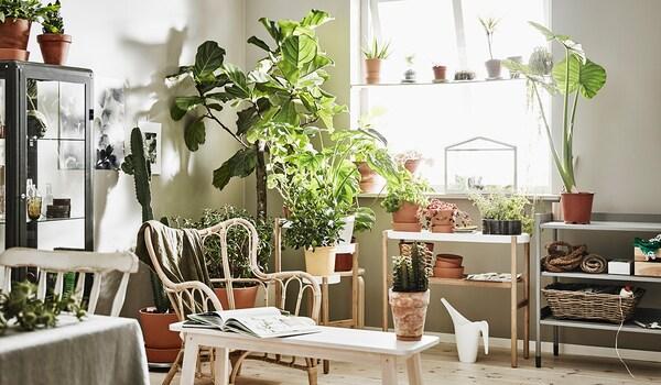 Dekorieren mit Pflanzen