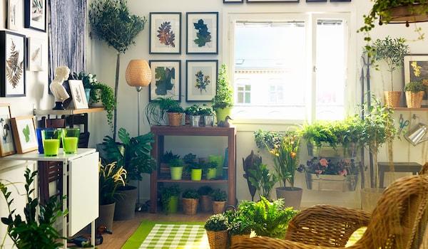 Dekorieren mit Pflanzen & Ideen für Blumendeko