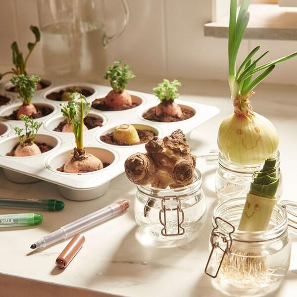 Des légumes plantés dans des moules à muffins, avec des sourires dessinés sur quelques un des légumes.