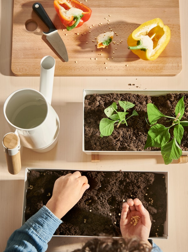 Des poivrons coupés en deux sur une planche à découper, des cache-pots BITTERGURKA à côté d'un arrosoir. Un enfant dépose des graines dans la terre.