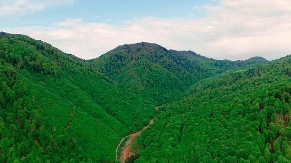 Deštný prales v Borneu.