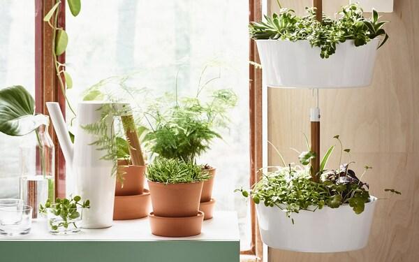 Detalhe de uma bancada verde com vários vasos, plantas e uma floreira suspensa