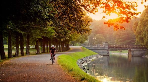Die Insel Djurgården bietet einem kilometerlange Spazier- und Radwege und eine Vielzahl an verschiedenen Tierarten.