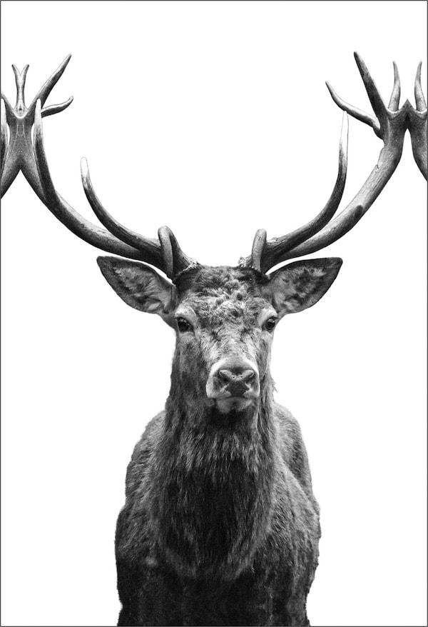 dieren posters ikea