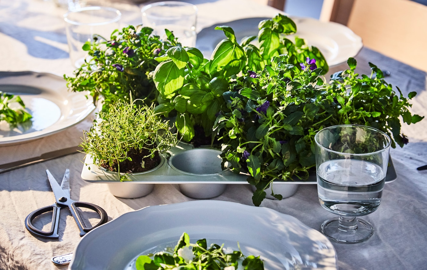 Different fresh herbs are planted in a muffin tin that sits at a set dining table.