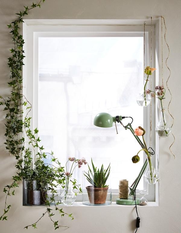 Distintas flores y plantas verdes en jarrones VILJESTARK, que dan a la ventana un ambiente verde y luminoso.