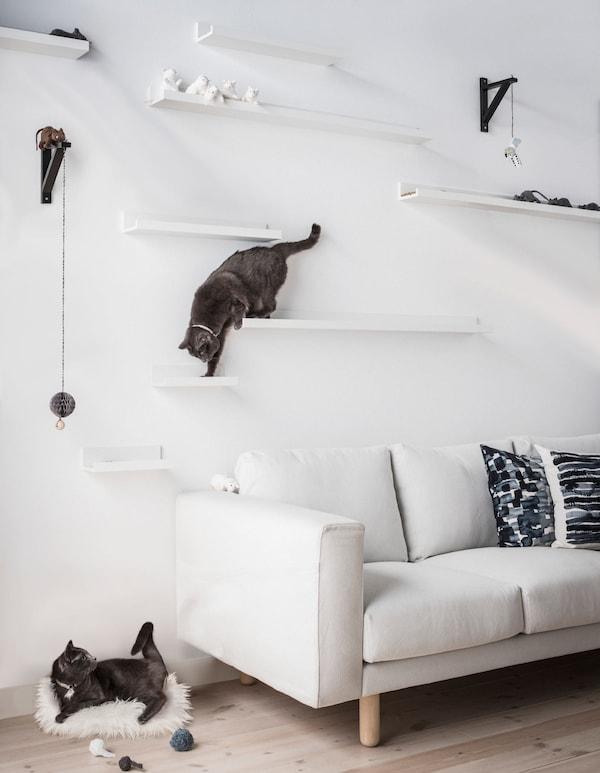 Dos gatos juegan en estantes creativos para gatos hechos a partir de estantes para cuadros MOSSLANDA de IKEA, montados a diferentes alturas sobre un sofá.